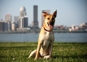 Humane Society: a dog in the grass with a skyline and river behind him