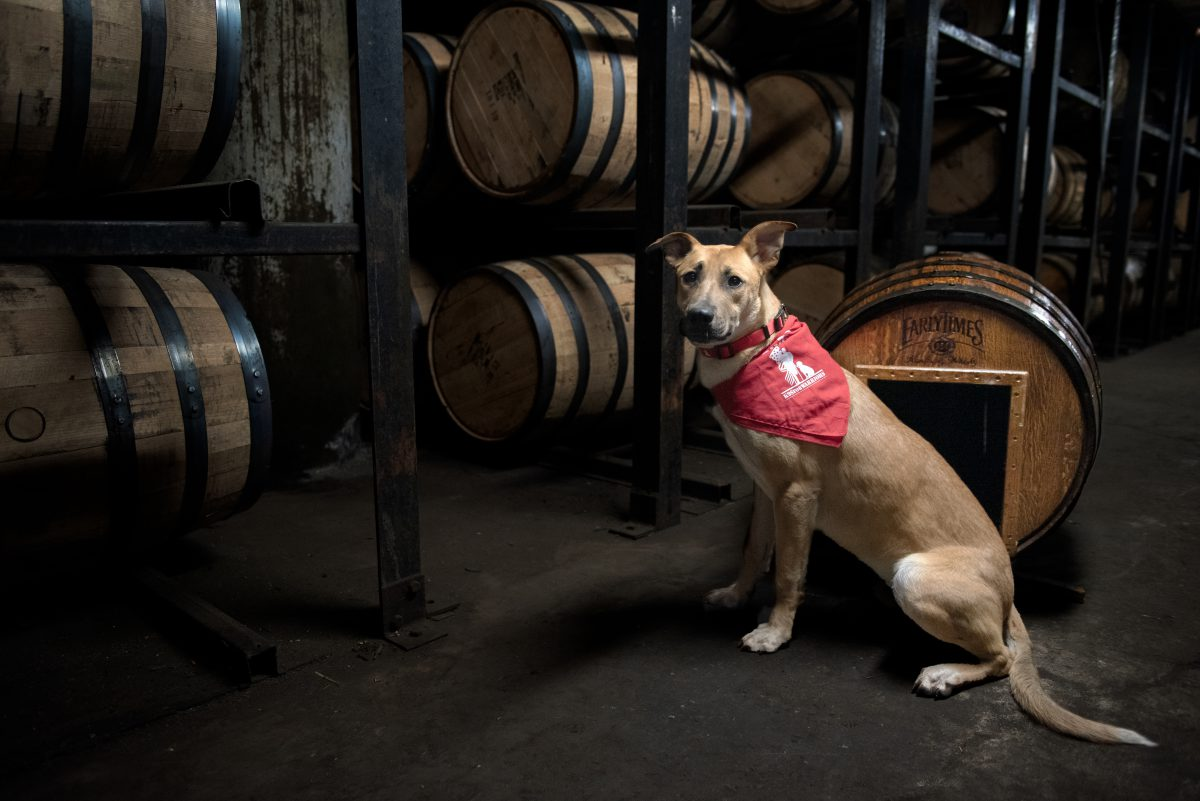 Humane Society: a dog with a red bandana with bourbon barrels behind him